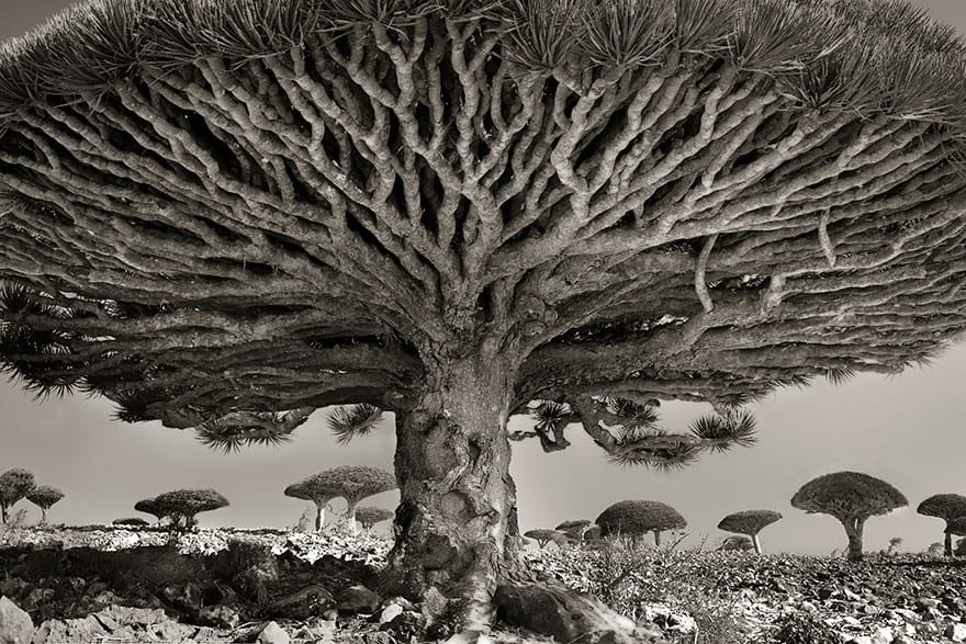 Beth Moon - HEART OF THE DRAGON
